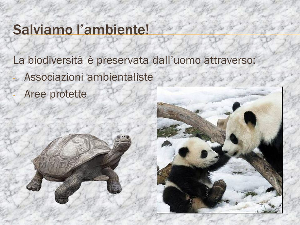 Salviamo l'ambiente!La biodiversità è preservata dall'uomo attraverso: Associazioni ambientaliste.
