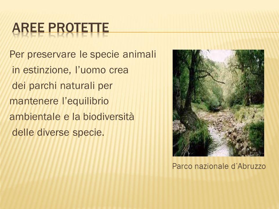 Aree protette Parco nazionale d'Abruzzo