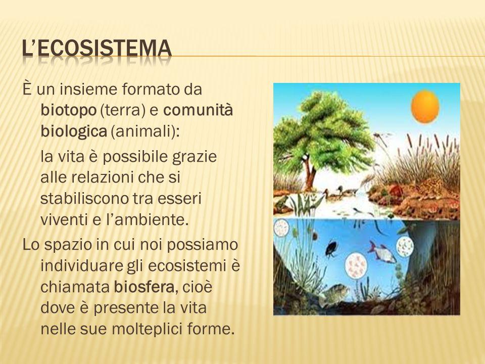 L'ecosistema È un insieme formato da biotopo (terra) e comunità biologica (animali):