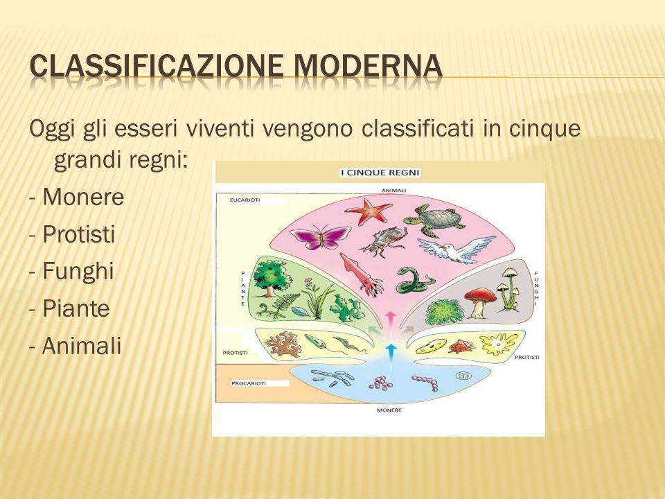 Classificazione moderna