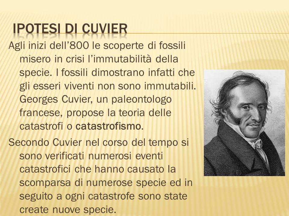 Ipotesi di Cuvier