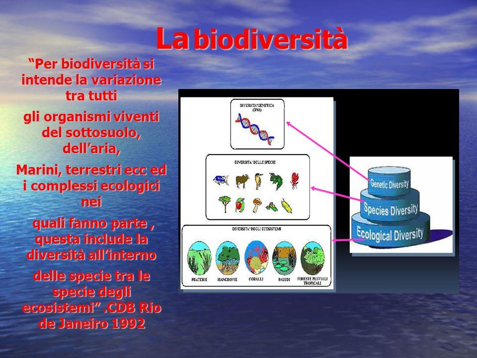 La biodiversità Per biodiversità si intende la variazione tra tutti