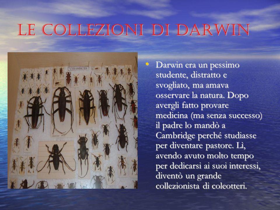 Le collezioni di Darwin