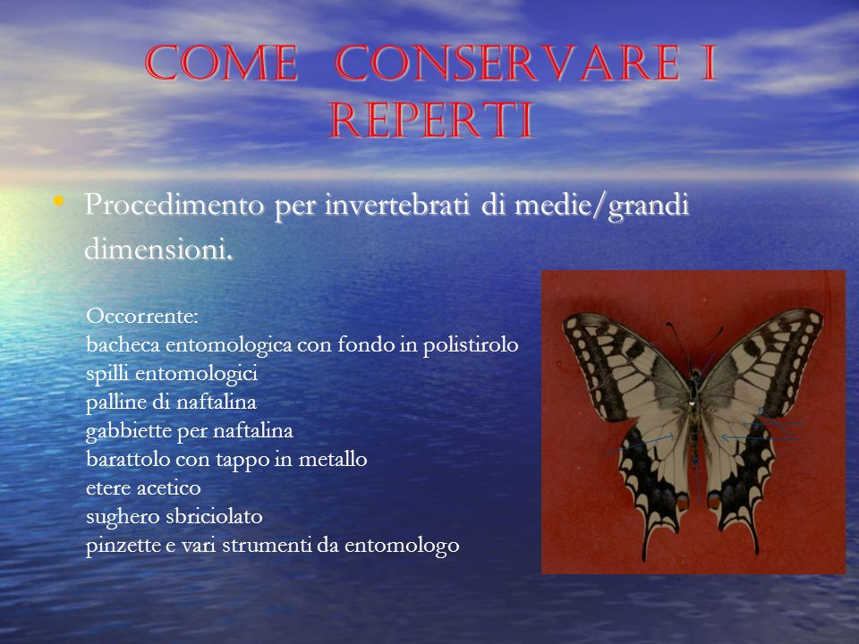 Come conservare i reperti