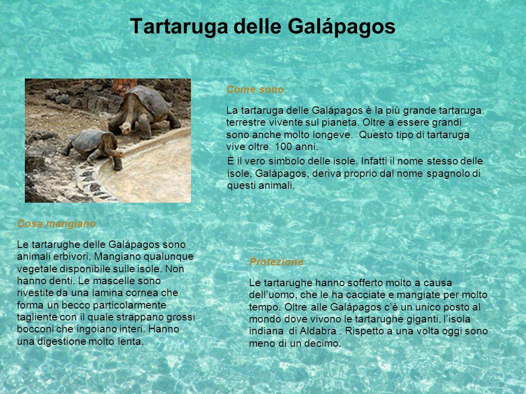 Tartaruga delle Galápagos