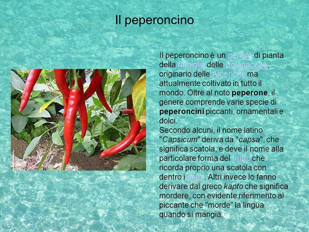 Il peperoncino