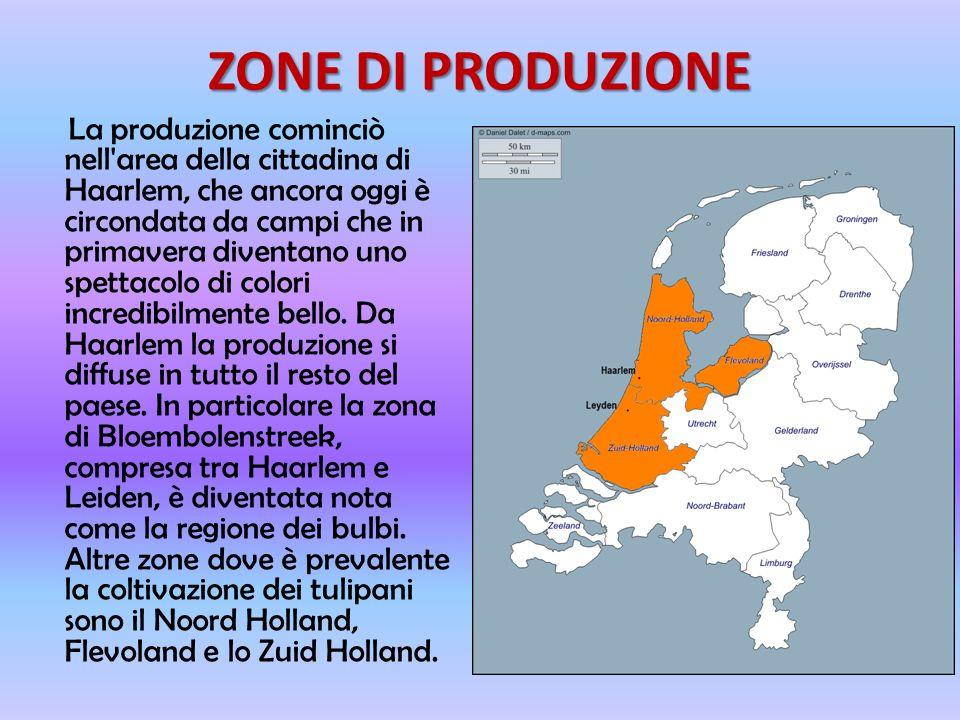 ZONE DI PRODUZIONE