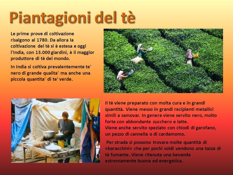 Piantagioni del tè