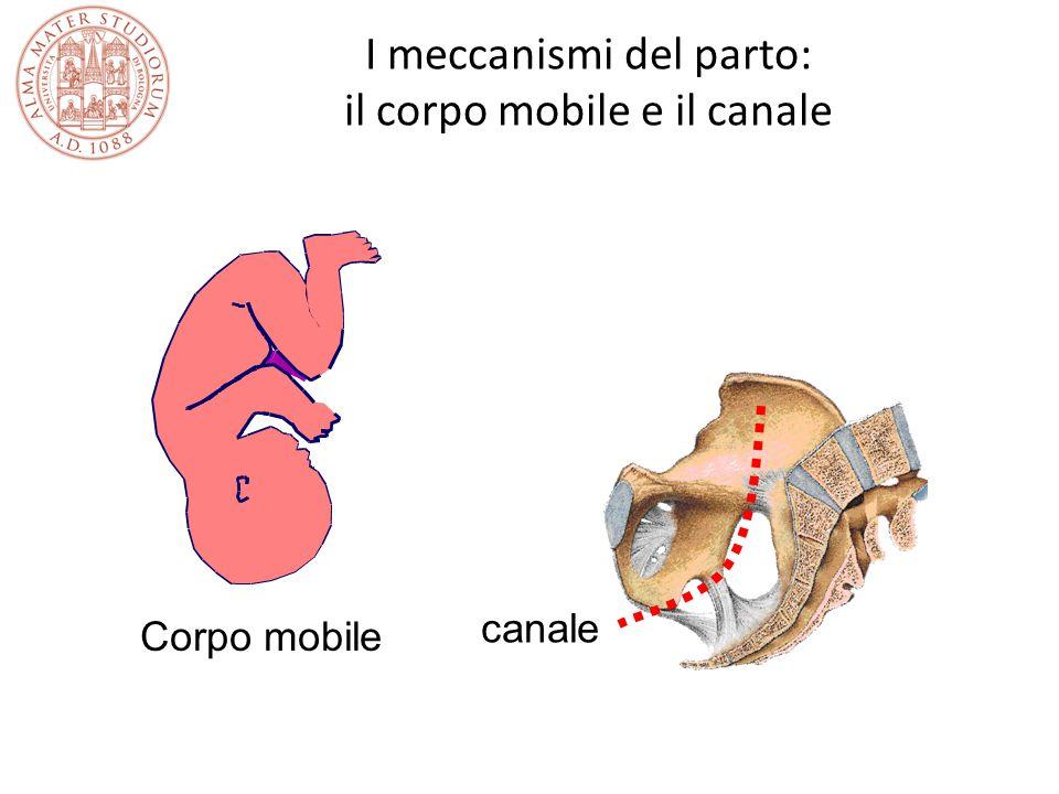 I meccanismi del parto: il corpo mobile e il canale