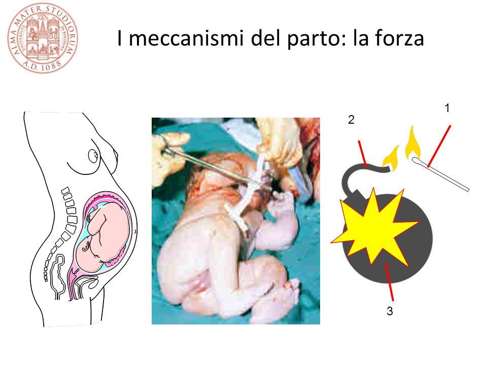 I meccanismi del parto: la forza