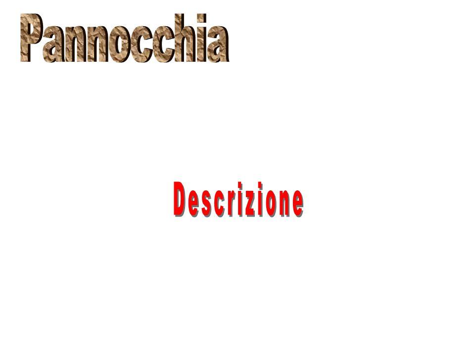 Pannocchia Descrizione