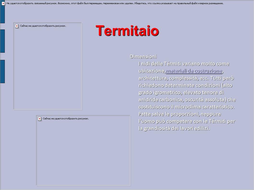 Termitaio