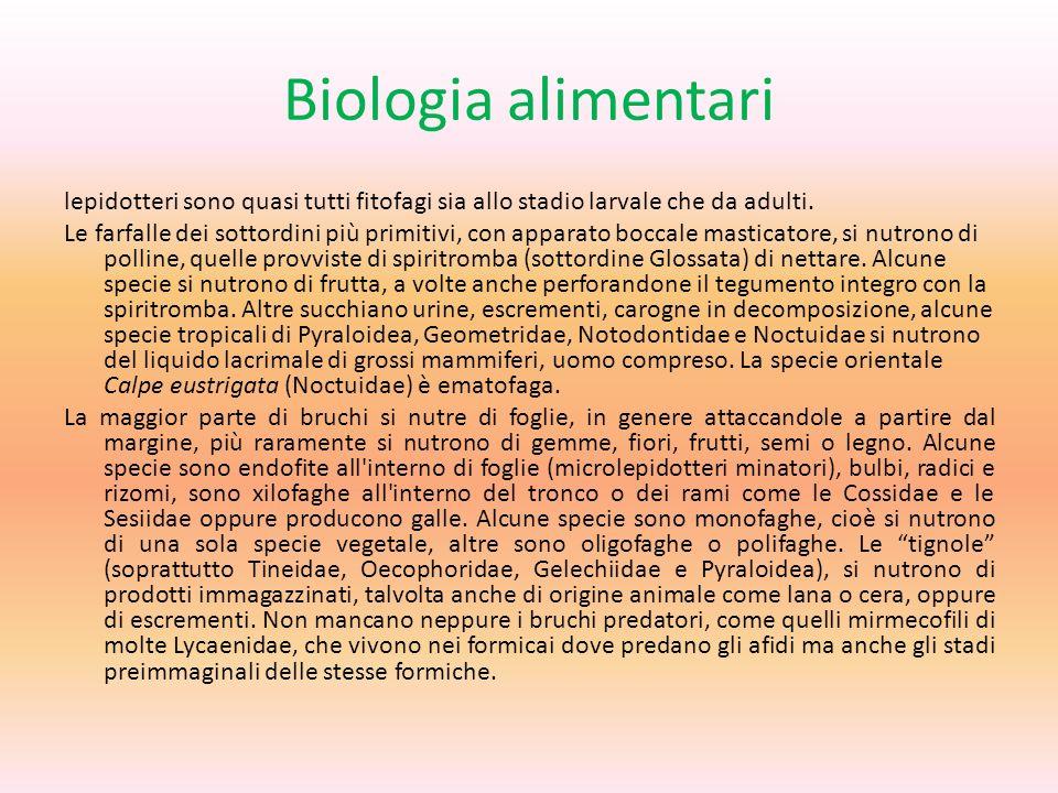 Biologia alimentari lepidotteri sono quasi tutti fitofagi sia allo stadio larvale che da adulti.