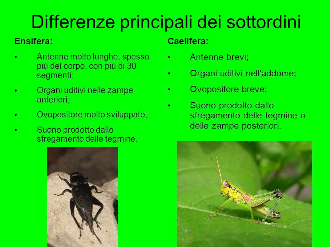 Differenze principali dei sottordini