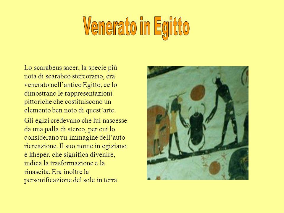 Venerato in Egitto .