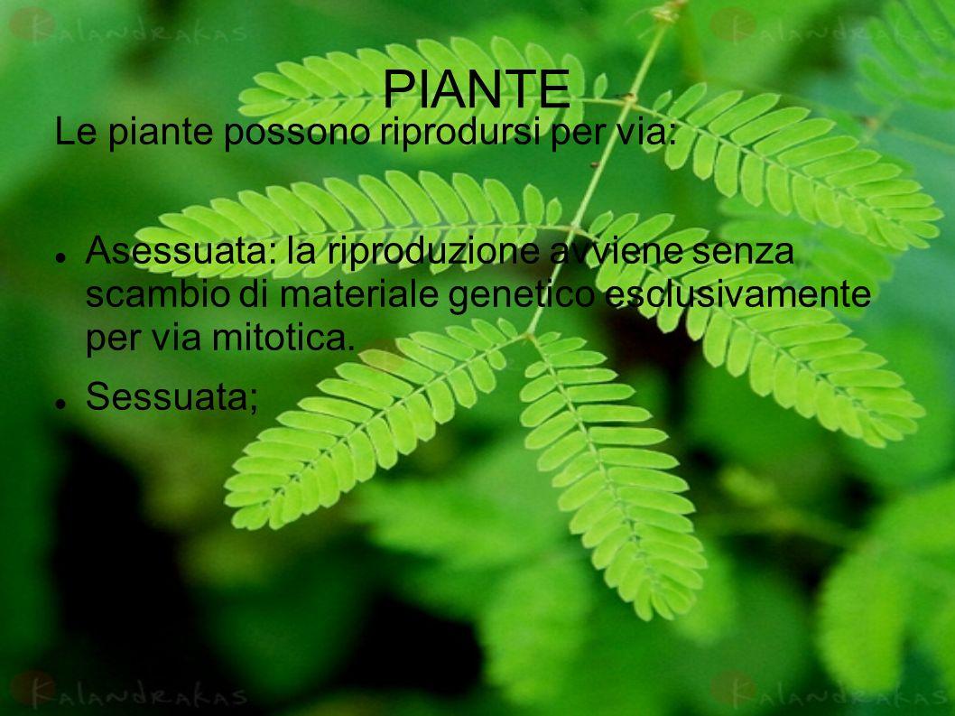 PIANTE Le piante possono riprodursi per via: