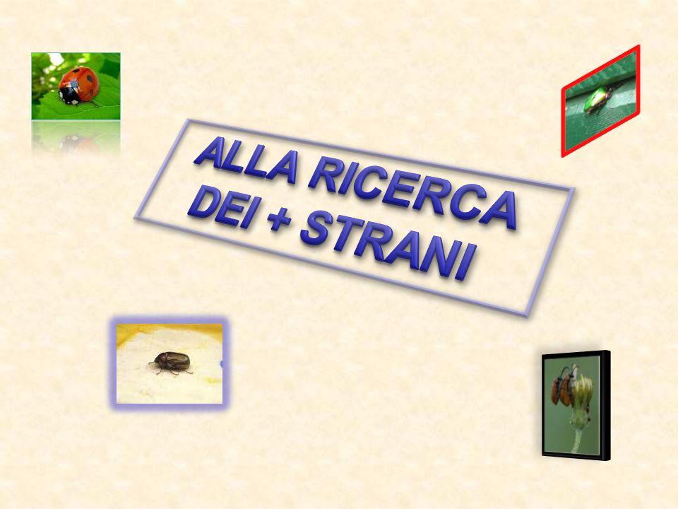 ALLA RICERCA DEI + STRANI