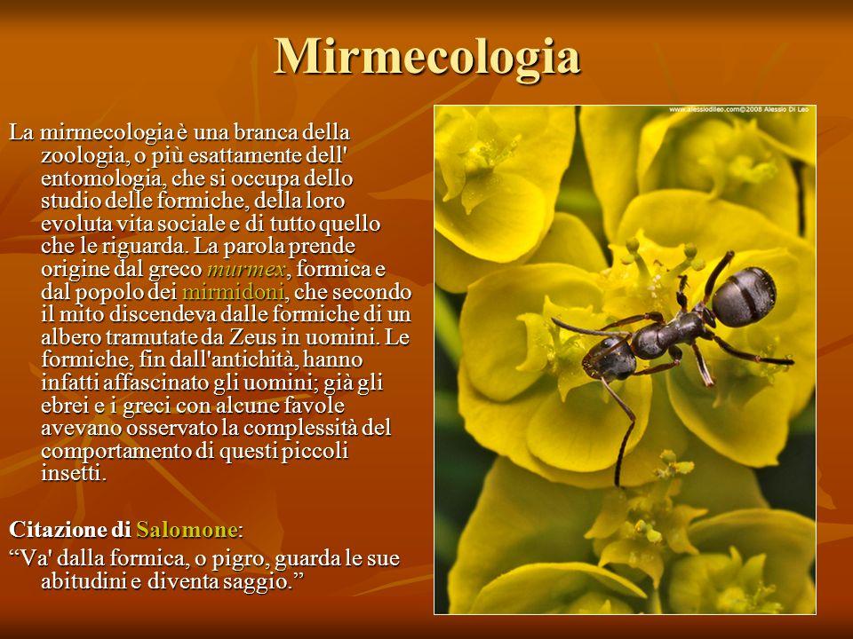 Mirmecologia