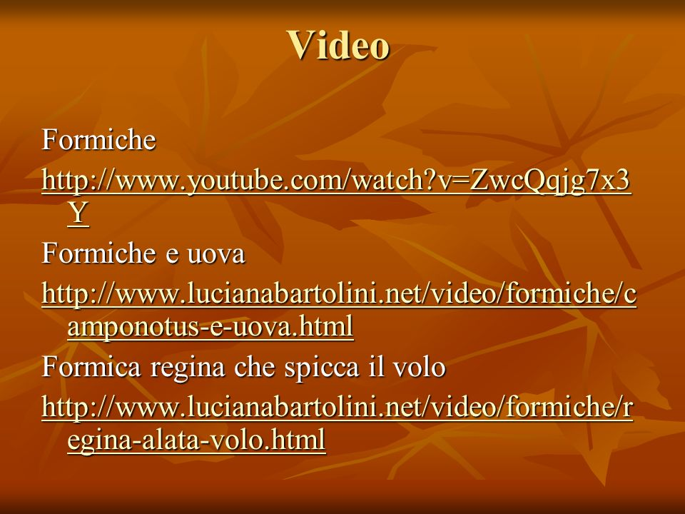 Video Formiche http://www.youtube.com/watch v=ZwcQqjg7x3Y