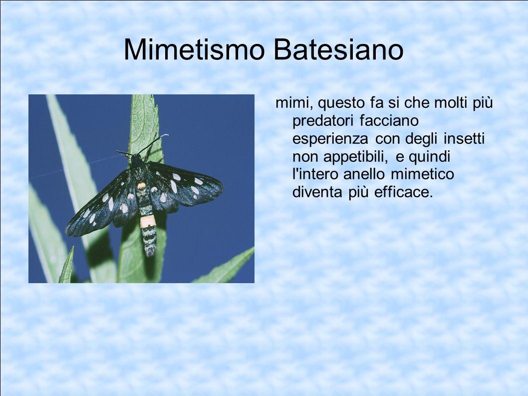Mimetismo Batesiano