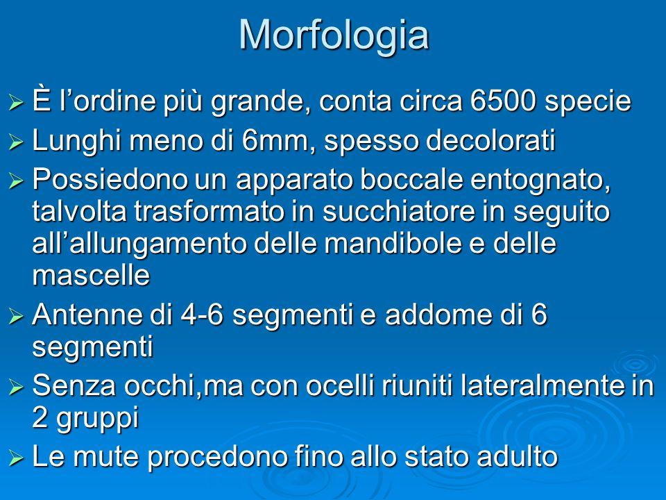 Morfologia È l'ordine più grande, conta circa 6500 specie