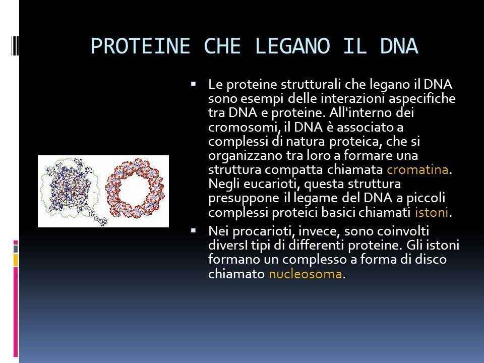 PROTEINE CHE LEGANO IL DNA