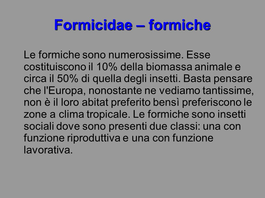 Formicidae – formiche
