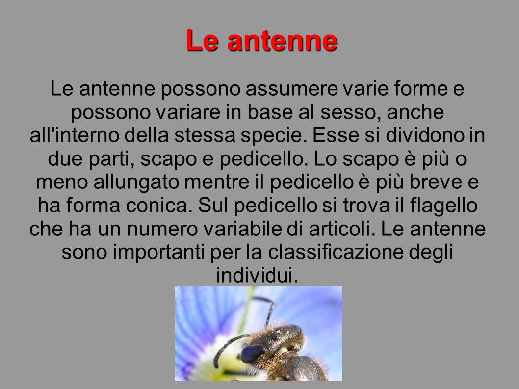 Le antenne