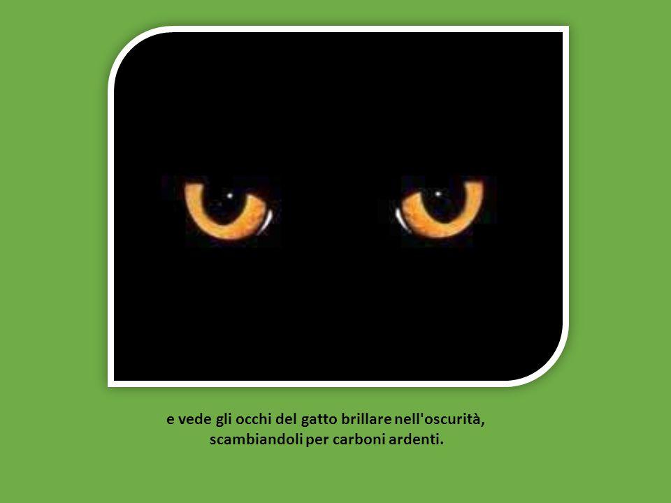 e vede gli occhi del gatto brillare nell oscurità,