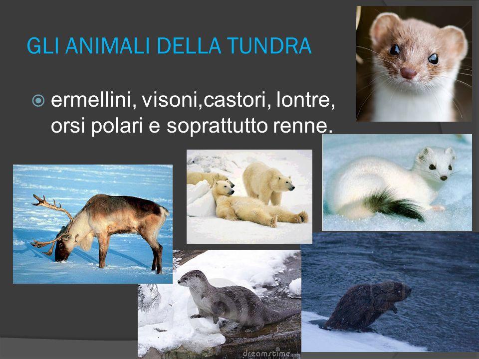 GLI ANIMALI DELLA TUNDRA