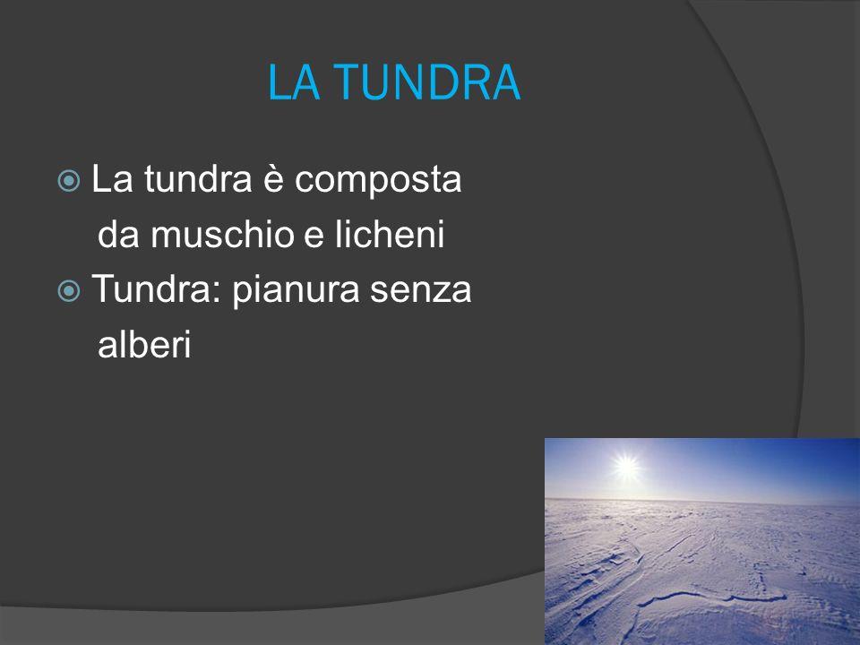 LA TUNDRA La tundra è composta da muschio e licheni