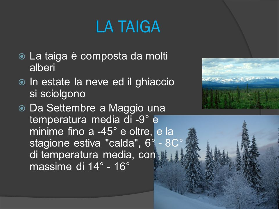 LA TAIGA La taiga è composta da molti alberi