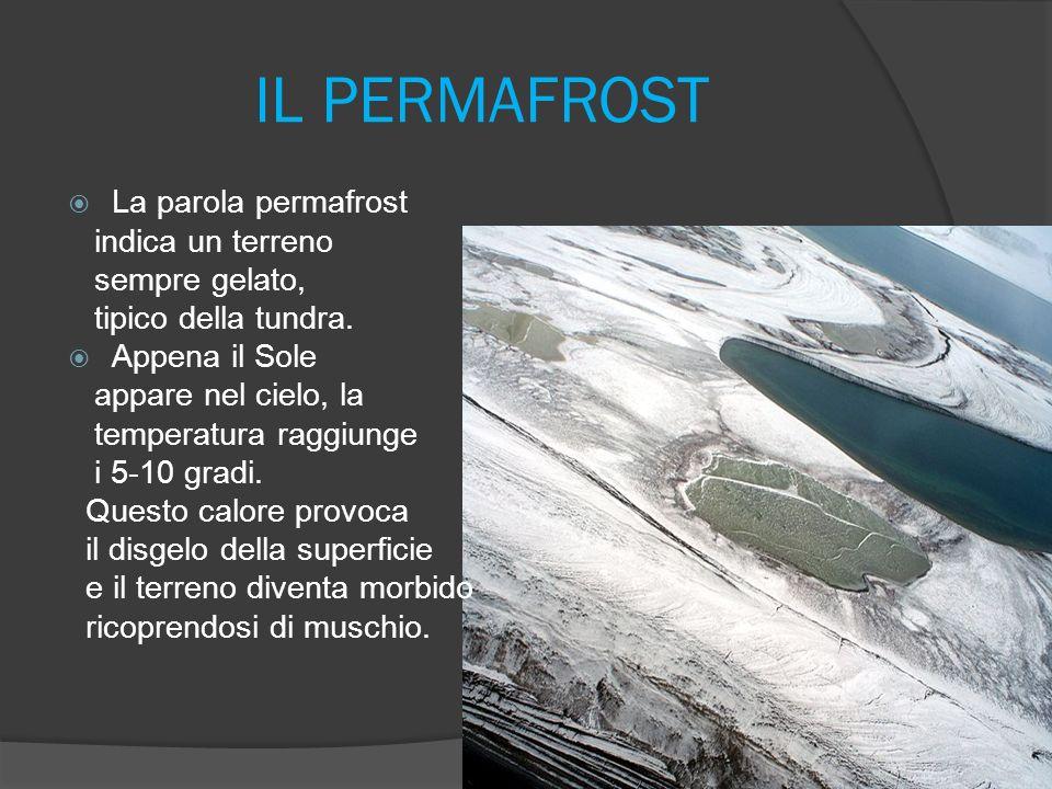 IL PERMAFROST La parola permafrost indica un terreno sempre gelato,