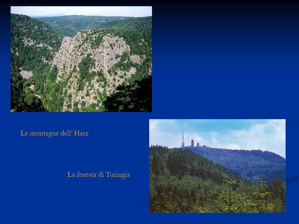 Le montagne dell' Harz La foresta di Turingia