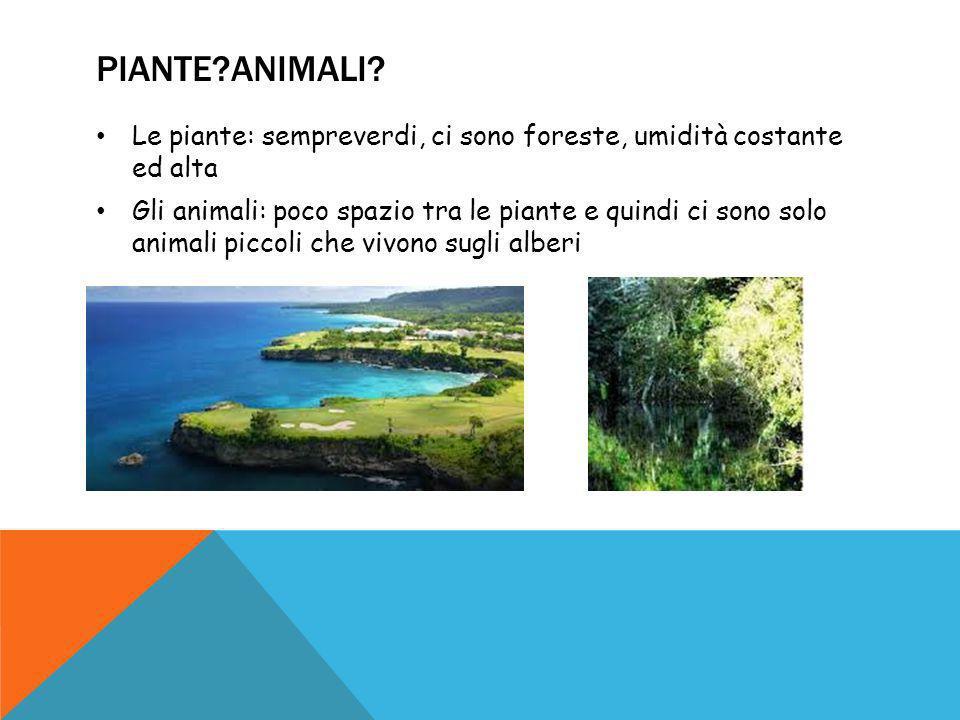 Piante Animali Le piante: sempreverdi, ci sono foreste, umidità costante ed alta.
