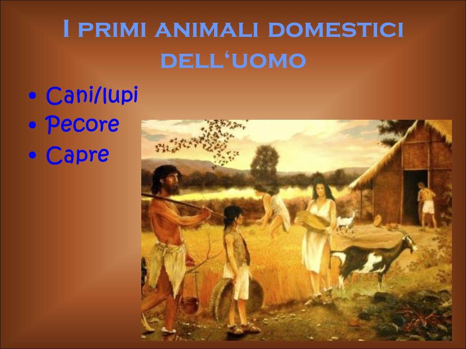 I primi animali domestici dell'uomo