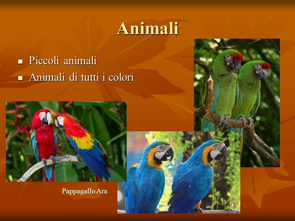 Animali Piccoli animali Animali di tutti i colori