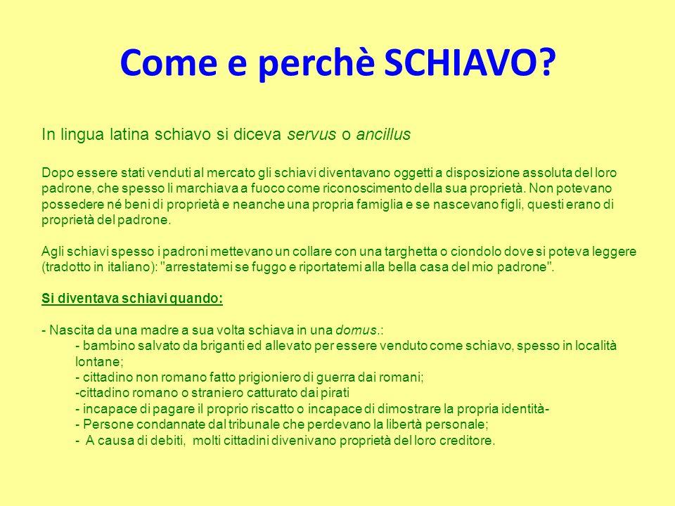 Come e perchè SCHIAVO In lingua latina schiavo si diceva servus o ancillus.
