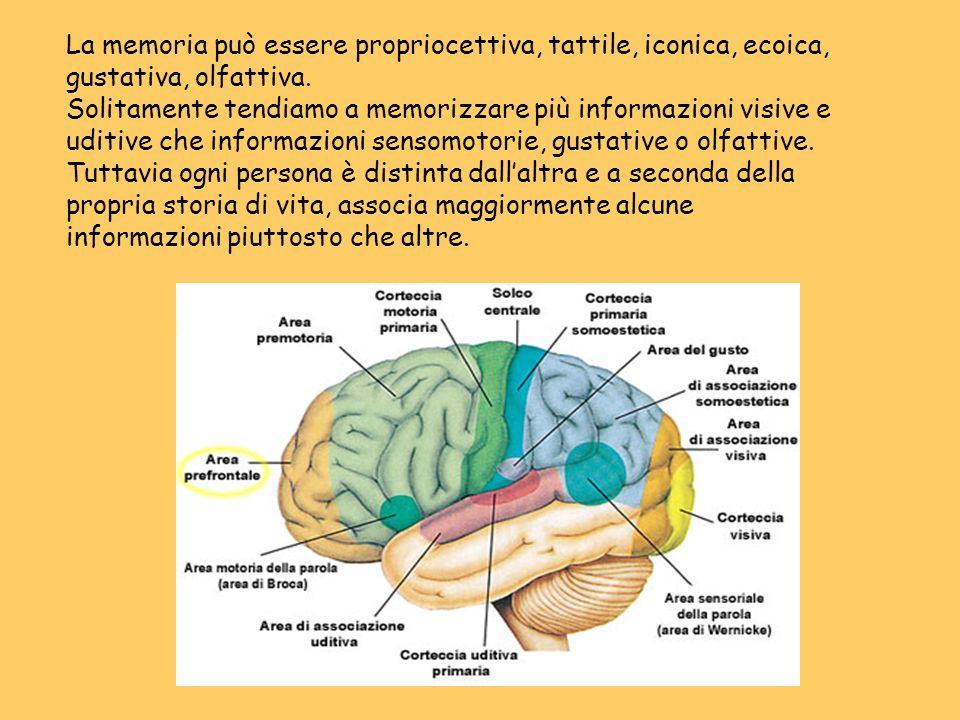 La memoria può essere propriocettiva, tattile, iconica, ecoica, gustativa, olfattiva. Solitamente tendiamo a memorizzare più informazioni visive e uditive che informazioni sensomotorie, gustative o olfattive. Tuttavia ogni persona è distinta dall'altra e a seconda della propria storia di vita, associa maggiormente alcune informazioni piuttosto che altre.