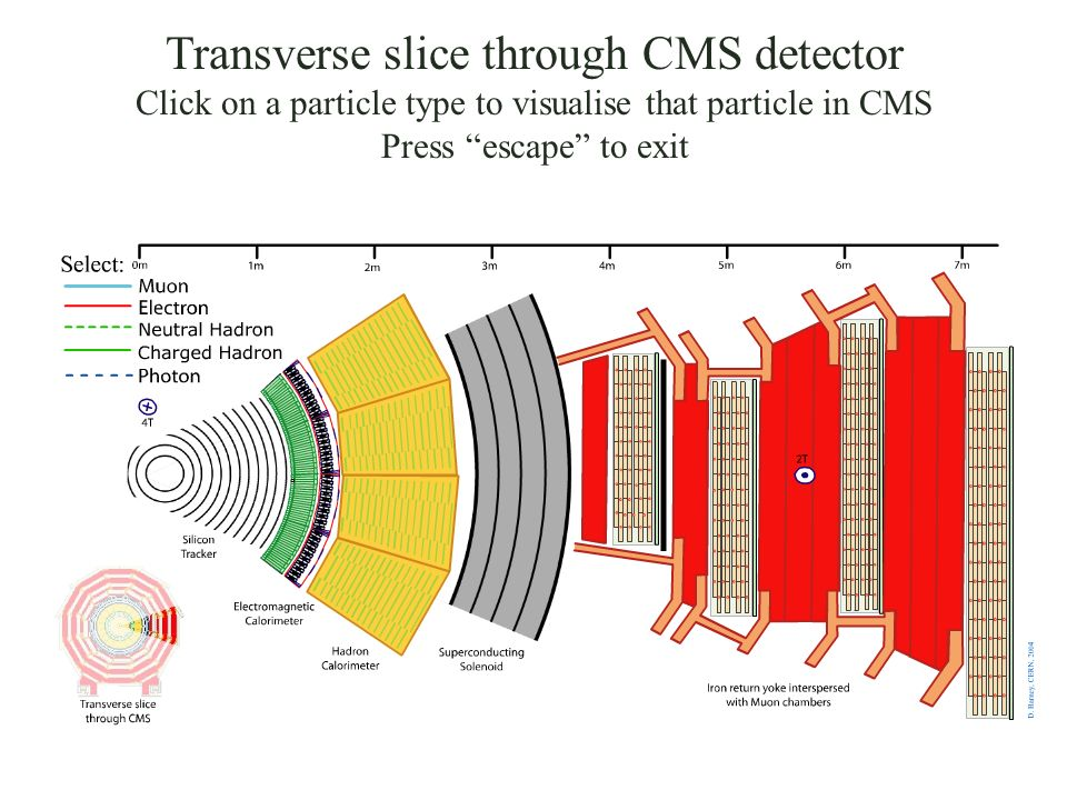 Transverse slice through CMS detector