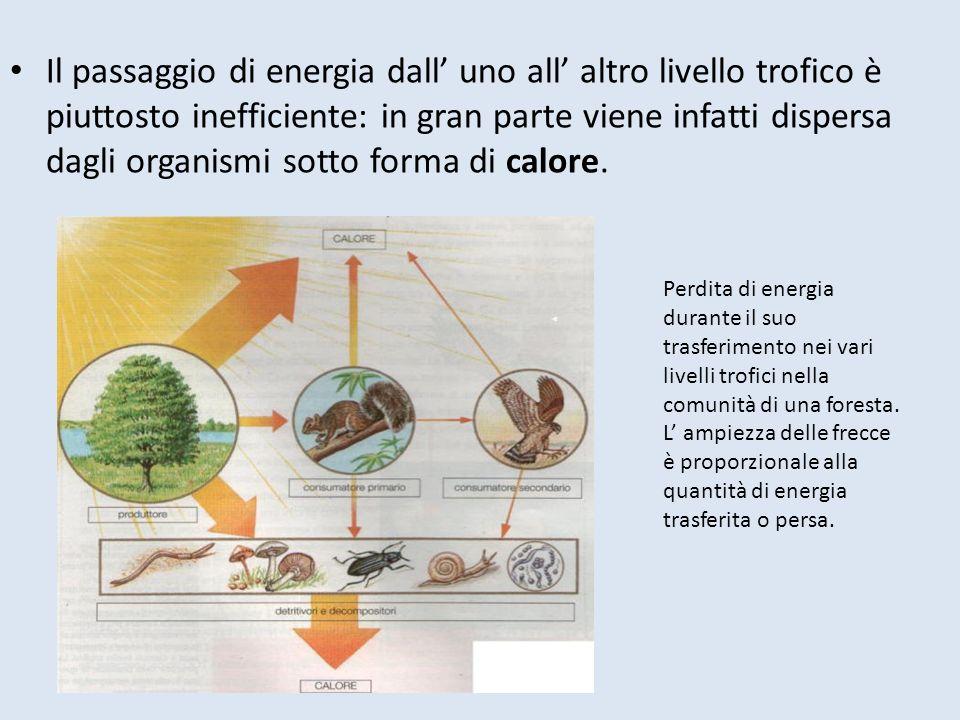 Il passaggio di energia dall' uno all' altro livello trofico è piuttosto inefficiente: in gran parte viene infatti dispersa dagli organismi sotto forma di calore.