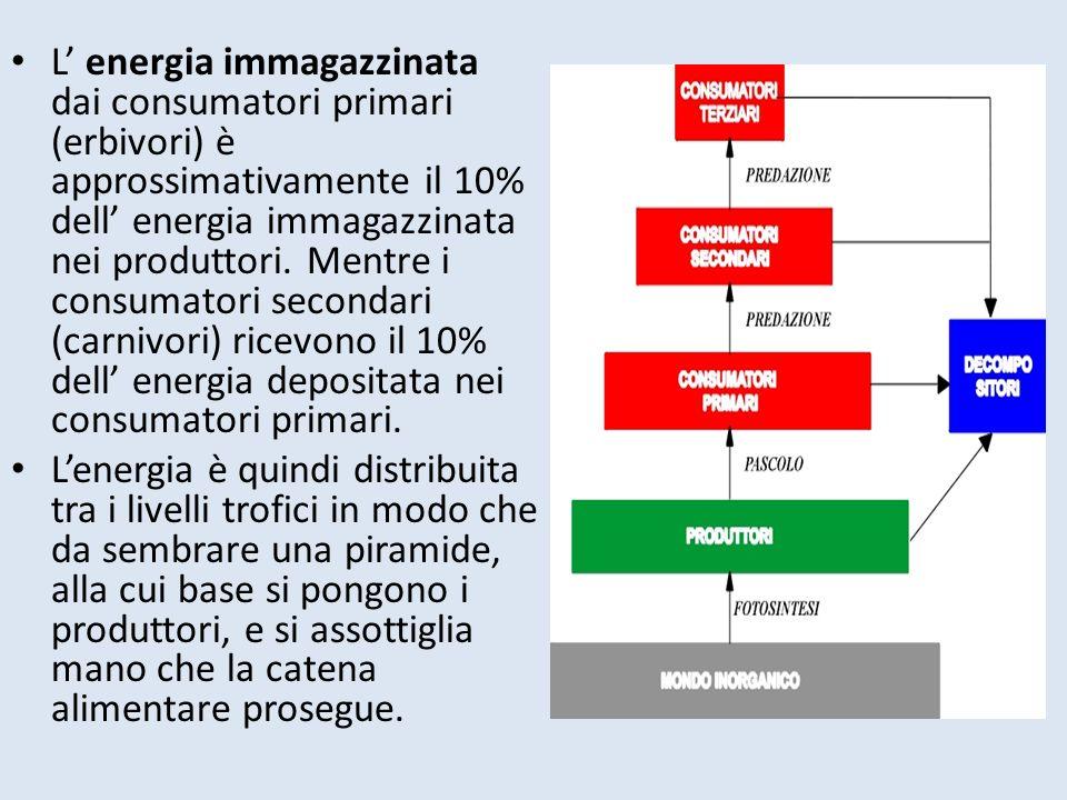 L' energia immagazzinata dai consumatori primari (erbivori) è approssimativamente il 10% dell' energia immagazzinata nei produttori. Mentre i consumatori secondari (carnivori) ricevono il 10% dell' energia depositata nei consumatori primari.
