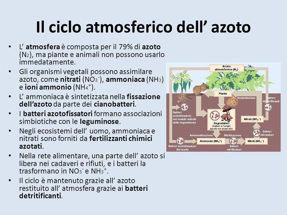 Il ciclo atmosferico dell' azoto