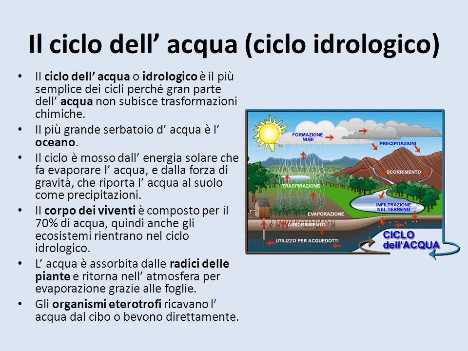 Il ciclo dell' acqua (ciclo idrologico)