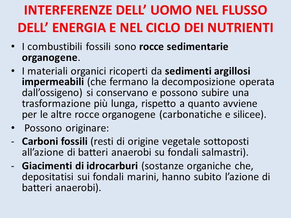INTERFERENZE DELL' UOMO NEL FLUSSO DELL' ENERGIA E NEL CICLO DEI NUTRIENTI