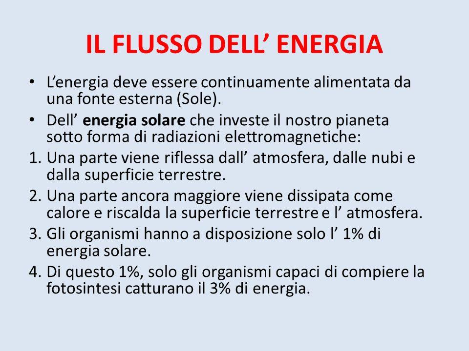 IL FLUSSO DELL' ENERGIA
