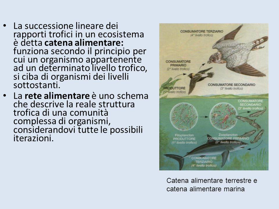La successione lineare dei rapporti trofici in un ecosistema è detta catena alimentare: funziona secondo il principio per cui un organismo appartenente ad un determinato livello trofico, si ciba di organismi dei livelli sottostanti.