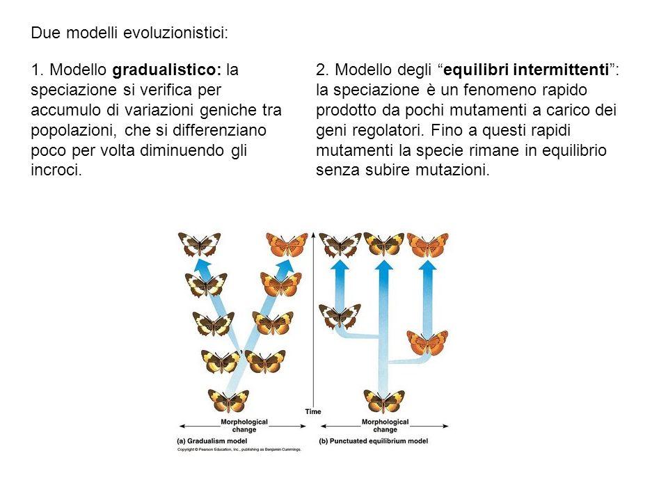 Due modelli evoluzionistici: