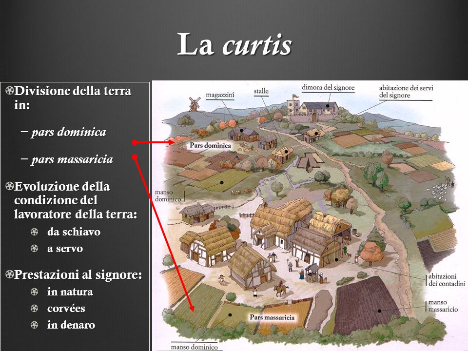 La curtis Divisione della terra in: − pars dominica − pars massaricia
