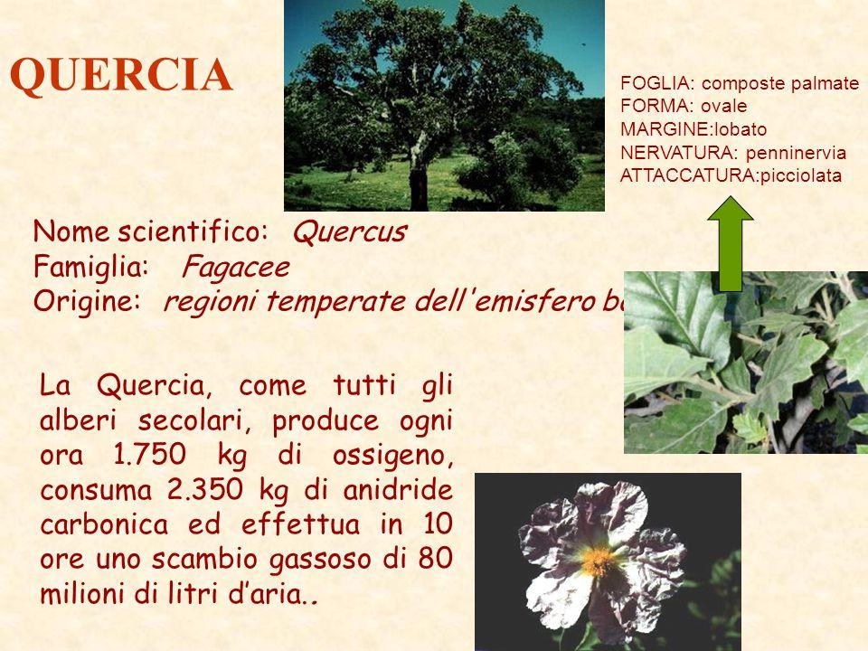 QUERCIA Nome scientifico: Quercus Famiglia: Fagacee